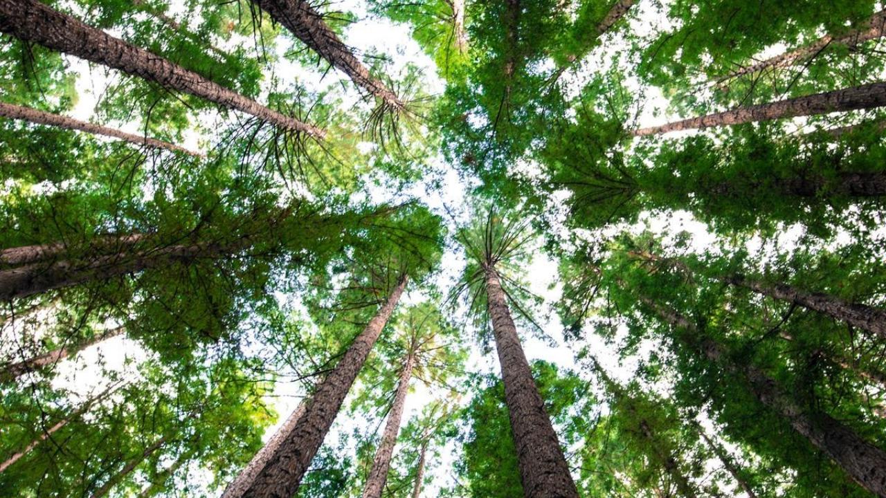 Arbor Day Australia